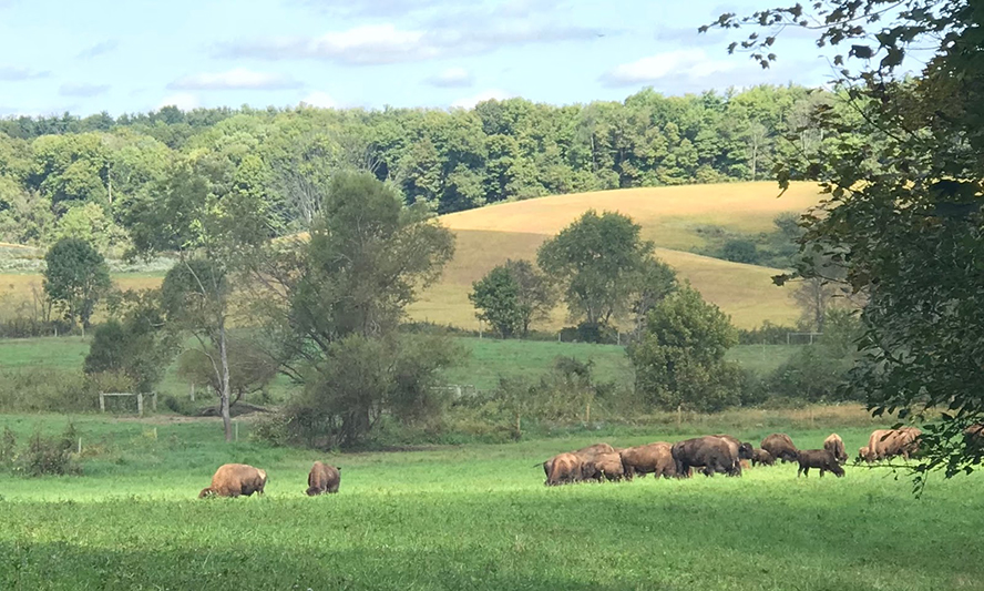 Cherokee Valley Bison Ranch